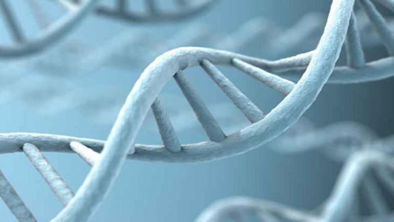 gen dizilimi