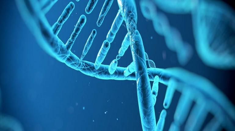 genetik dizilim