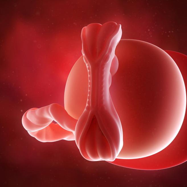 5 haftalık gebelik görüntüsü