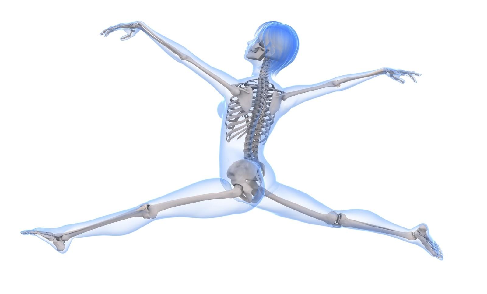 iskelet ve kemikler