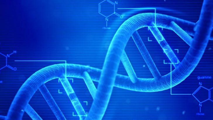 gen aktarımı